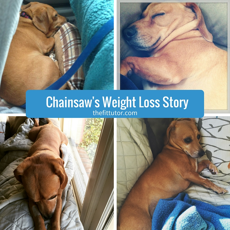 Chainsaw's Weight loss story - how portion control can help YOU lose weight #weightloss #portioncontrol