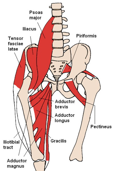 Hip flexor stretches muscles
